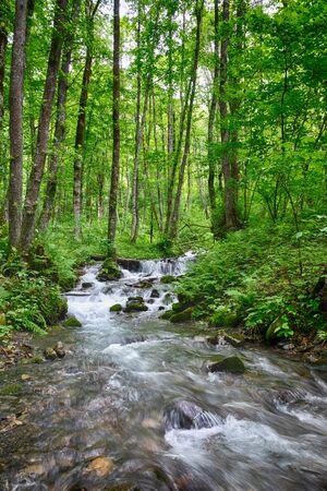 Veloce ruscello di montagna nella foresta, immerso nel verde. Cascata di piccole cascate in un ruscello di montagna. Protezione ambientale. Sfondo di viaggio Archivio Fotografico