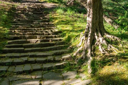 Old steps in the green park. The steps in the park and old tree with roots. Stok Fotoğraf