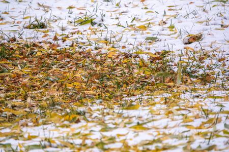 First snow on the green grass and fallen leaves in autumn. Symbol of the coming winter. Natural background texture. Yellow and green fallen leaves on the grass with snow.
