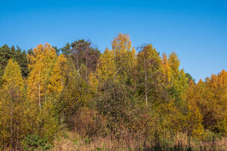 Trees with orange, green and yellow leaves in the autumn forest. Nature background. Golden autumn colors.