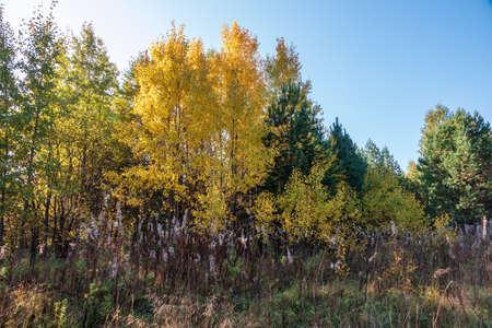 Trees with orange, green and yellow leaves in the autumn forest. Yellowed grass on the edge of the autumn forest. Nature background. Golden autumn colors. Banco de Imagens