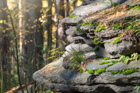 A layered rocky cliff wall in the autumn forest. Nature background. Golden autumn colors.