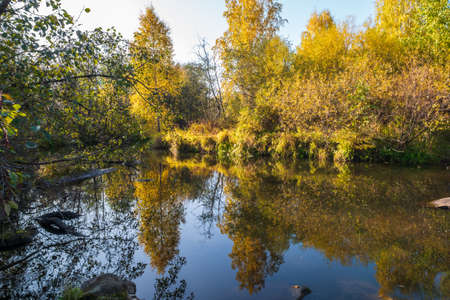 Autumn forest is reflected in the water of river. Autumnal forest near the lake. Golden autumn colors.
