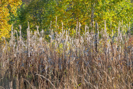 Yellowed grass on the edge of the autumn forest. Natural landscape. The edge of the meadow and the forest. Golden autumn.