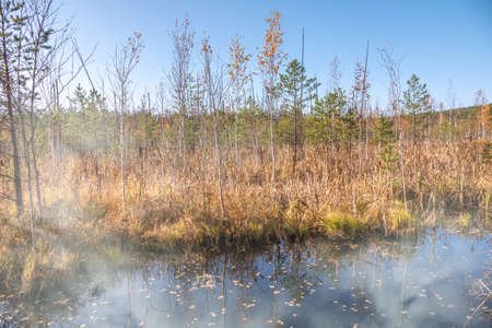 Swamp shore in the autumn forest. Fog on the water. Colorful fall foliage reflecting in surface of calm water Banco de Imagens