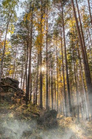 Stone rock in autumn forest in fog. Autumn mountain forest, rocks. Mountain rocks in autumn forest. Autumn landscape. Golden colors.