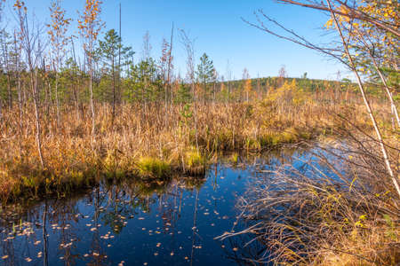 Swamp shore in the autumn forest. Colorful fall foliage reflecting in surface of calm water