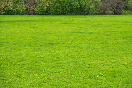 Green meadow with trimmed grass. Evenly trimmed spring green grass. Natural background