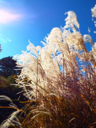 밝은 햇빛으로 장식용 키 큰 잔디 백라이트 스톡 콘텐츠