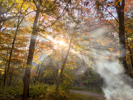 campfire smoke in trees with sunlight Stock Photo