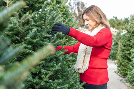 closeup of a woman shopping for a Christmas tree on tree lot
