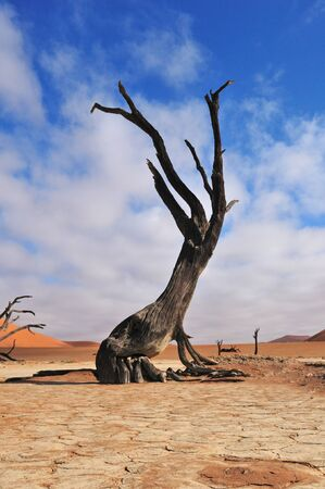 A lonely tree skeleton at Deadvlei near Sossusvlei, Namibia