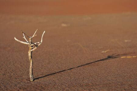 A small twig at Sossusvlei in the Namib Desert
