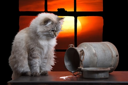 Montage from three photos of a cat, milk can and sunset Stock Photo