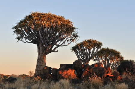 Sunrise at the Quiver Tree Forest near Keetmanshoop, Namibia