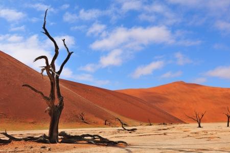 ソーサス フライ、ナミビアの近く Deadvlei で孤独な木スケルトン