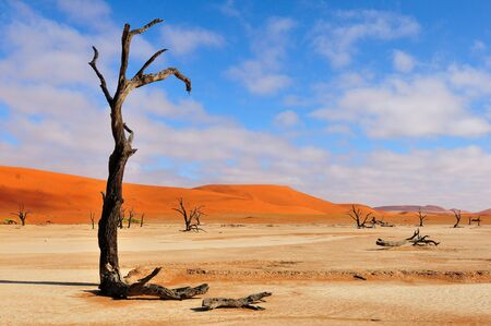 A lonely tree skeleton at Deadvlei near Sossusvlei, Namibia photo