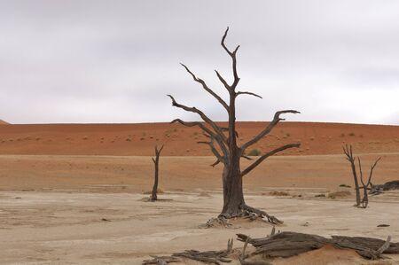 Tree skeletons at Deadvlei near Sossusvlei, Namibia photo