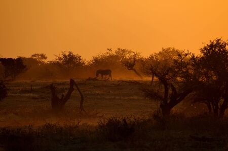 Sunset at the Okaukeujo waterhole, Namibia photo
