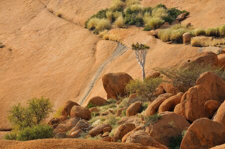 Landscape with quiver tree at the Spitzkoppe in Namibia Stock Photo