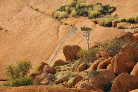 quiver: Landschap met quiver boom bij de Spitzkoppe in Namibië