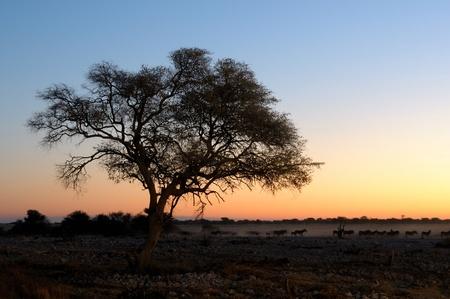 equid: Sunset view of the waterhole, Okaukeujo Rest Camp,  Etosha National Park, Namibia