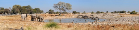 Panorama aus vier Fotos von Okaukeujo Wasserloch, Etosha National Park, Namibia