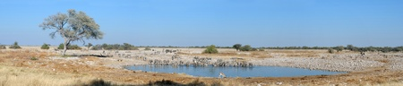 Panorama from four photos of Okaukeujo waterhole, Etosha National Park, Namibia