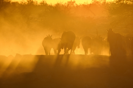 Sunset at the Okaukeujo waterhole, Namibia Stock Photo
