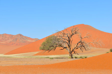 floodplain: Grass in the Tsaugab River floodplain near Sossusvlei, Namibia