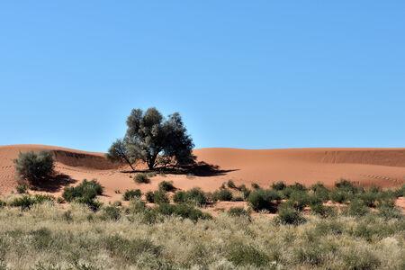 A farm scene in the Kalahari Desert in Namibia Stock Photo