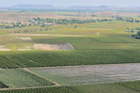 northern african: Vineyards at Keimoes in the Northern Cape Province of South Africa Stock Photo