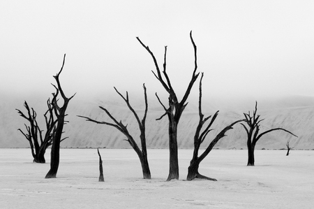 Tree skeletons in monochrome at Deadvlei near Sossusvlei, Namibia photo