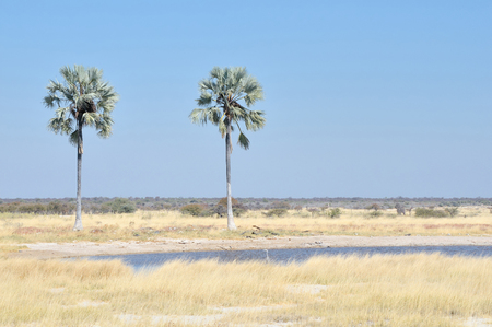 waterhole: Two Palms waterhole in the Etosha National Park, Namibia