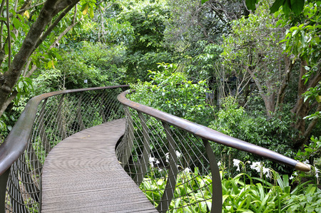 Kirstenbosch Centenary Tree Canopy Walkway called the Boomslang (Tree Snake), winding for 130 meters like a snake 12 meters above the ground Stok Fotoğraf