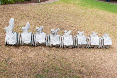 vertebrae: Whale vertebrae on display in the garden of the Dias Museum in Mosselbay, South Africa