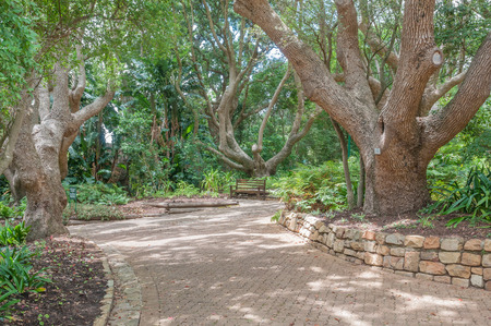 newlands: A shady walkway and bench in the  Kirstenbosch National Botanical Garden in Newlands, Cape Town