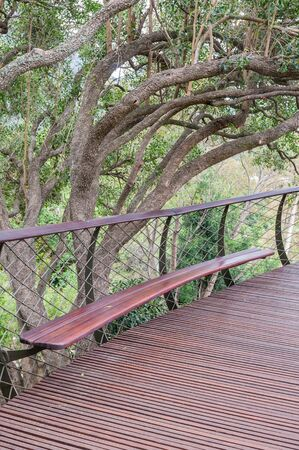 Bench on the Kirstenbosch Tree Canopy Walkway called the Boomslang (Tree Snake), winding for 130 meters like a snake 12 meters above the ground