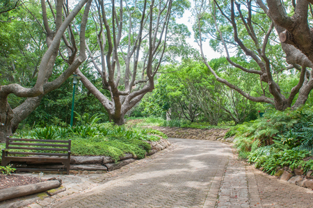 newlands: A shady walkway in the  Kirstenbosch National Botanical Garden in Newlands, Cape Town Stock Photo