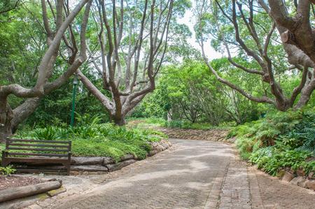newlands: A shady walkway in the  Kirstenbosch National Botanical Garden in Newlands, Cape Town Stock Photo