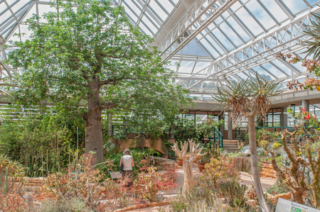 newlands: CAPE TOWN, SOUTH AFRICA - DECEMBER 9, 2014: The Conservatory at Kirstenbosch National Botanical Garden is a desert house that displays the succulent treasures of southern Africa. Editorial