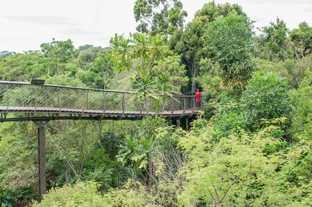 CAPE TOWN, SOUTH AFRICA - DECEMBER 9, 2014: Unidentified people on the Kirstenbosch Tree Canopy Walkway called the Boomslang (Tree Snake), winding for 130 meters like a snake 12 meters above the ground Editorial