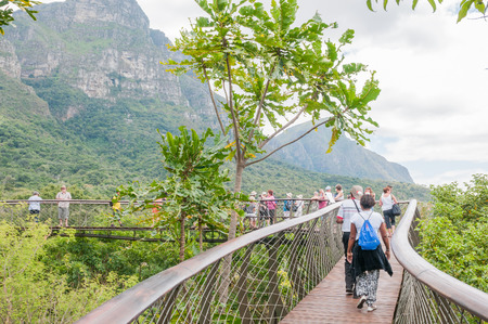 africa tree: CAPE TOWN, SOUTH AFRICA - DECEMBER 9, 2014: Unidentified people on the Kirstenbosch Tree Canopy Walkway called the Boomslang (Tree Snake), winding for 130 meters like a snake 12 meters above the ground Editorial