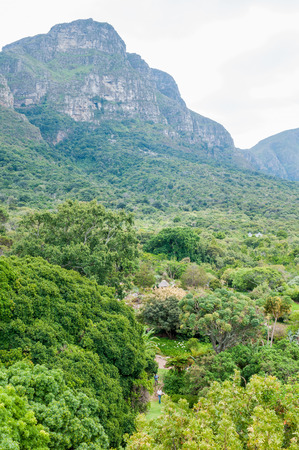 CAPE TOWN, SOUTH AFRICA - DECEMBER 9, 2014: View across part of the Kirstenbosch Botanical Gardens towards Table Mountain