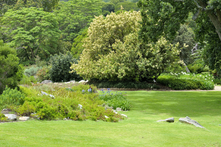 newlands: The serenity of the Kirstenbosch National Botanical Gardens in Cape Town, South Africa