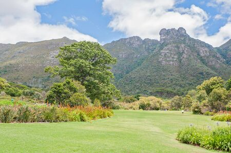 newlands: CAPE TOWN, SOUTH AFRICA - DECEMBER 9, 2014: View of part of the Kirstenbosch Botanical Gardens and Castle Rocks on Table Mountain