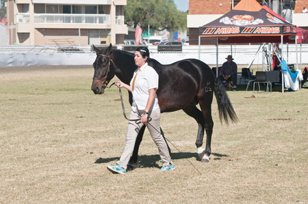 championships: BLOEMFONTEIN, SOUTH AFRICA - APRIL 28, 2015: Rider and horse at the South African National Championships