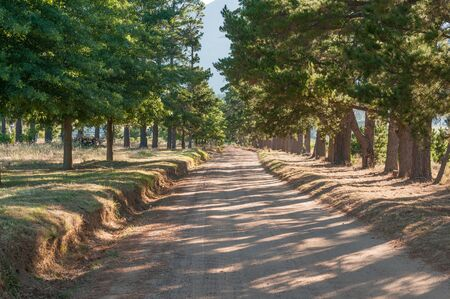 south africa soil: Early morning shadows on a road near Sir Lowrys Pass near Somerset West Stock Photo