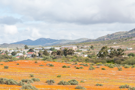 northern cape: GARIES, SOUTH AFRICA - AUGUST 13, 2015:  Indigenous orange and yellow daisies with Garies, a small town in the Namaqualand region of the Northern Cape, in the back
