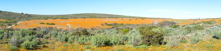 northern african: Panorama of Skilpad in the Namaqua National Park of South Africa with large fields of indigenous orange daisies in the back Stock Photo